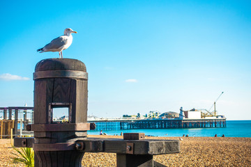 One beautiful seagull standing on the seat with local people and visitor sunbathing on the beach at Brighton Pier, UK the famous place for people.