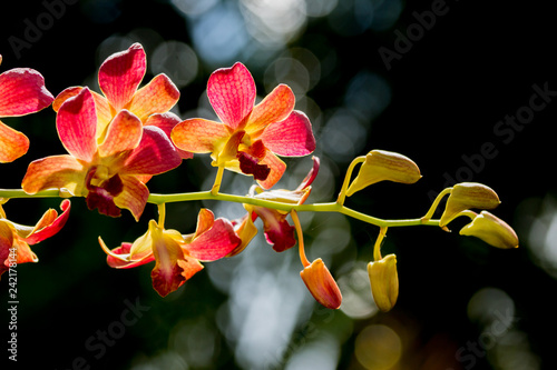 Orchid flower on branch - 242178144