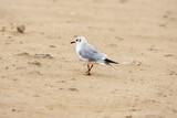 Seagulsl bird on beach at cloudy day