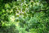 abstract green springtime leaves - 242182722