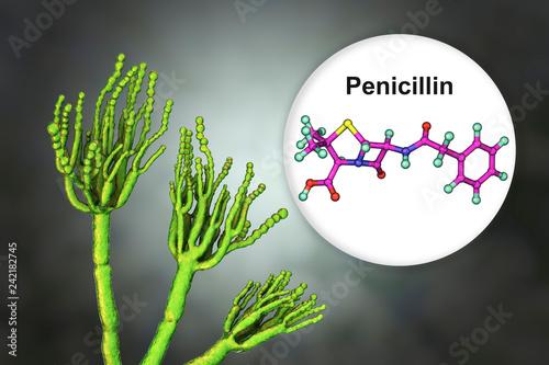 Leinwanddruck Bild Fungi Penicillium producing penicillin antibiotic, 3D illustration
