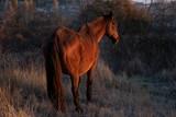 Caballo marrón - 242193149
