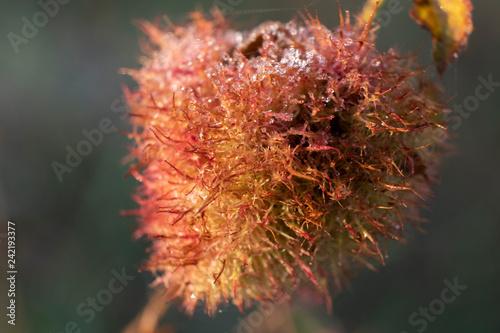 Capullo de flor con hielo - 242193377