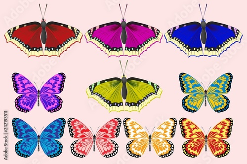 A set of butterflies of different colors. - 242193511