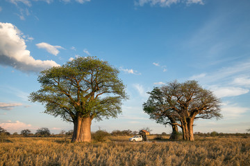 Camping at Baine's Baobabs in the Nxai Pan in Botswana © Mathias
