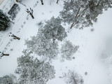 aerial top view of winter snowy forest