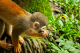 monkey - Pomerode SC Brasil - 242209900