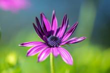 """Постер, картина, фотообои """"Purple beauty"""""""