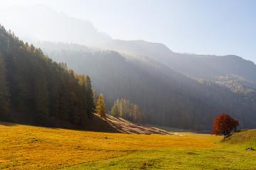 Herbstwiesen im Sonnenlicht