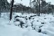 Leinwanddruck Bild - Winter Snowy Landscape