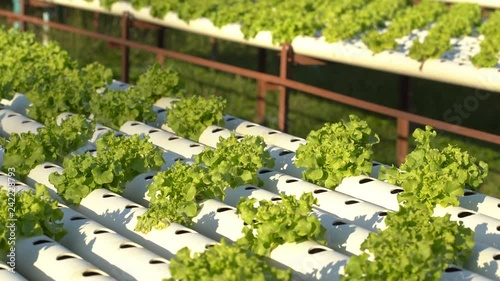 panning shot of Green Oak hydroponics vegetable farming