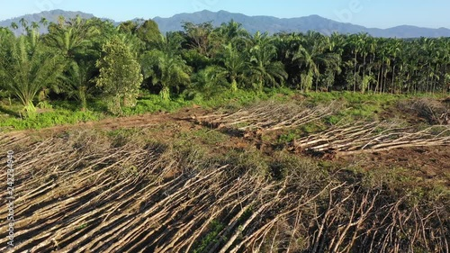 Deforestation of rainforest and palm oil plantations in Thailand