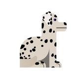 Dalmatian sits.