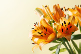 Orange lilium, symbol of happiness, love and warmth
