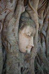 The head of an ancient sculpture of Buddha which grew into tree roots. A look in a profile. Symbol cities of Ayutthaya, Thailand