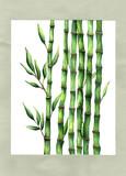 Hand drawn bamboo illustration watercolor