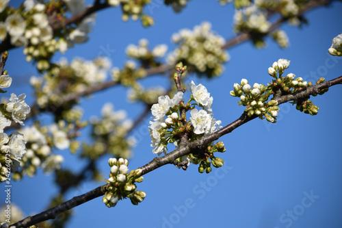 Vierte Primavera Frühling  ft81040472 Printemps Spring  - 242260725