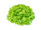 Batavia lettuce salad rosette - 242274577