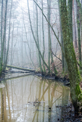Leinwanddruck Bild Dark forest landscape. A river and trees in the fog on a cloudy winter day. Latvia