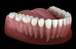 Leinwanddruck Bild - Morphology of mandibular human gum and teeth. Medically accurate tooth 3D illustration