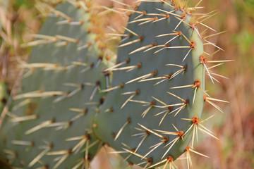 Cactus close up.