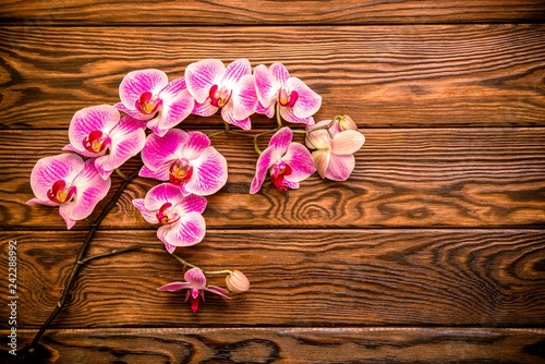 A branch of purple orchids on a brown wooden background