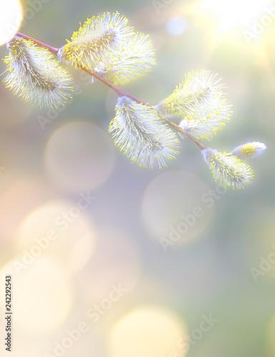 Foto Murales Art Spring flowers background
