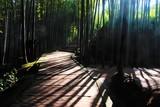Fototapeta Bambus - 대나무 숲의 빗살 © Moko
