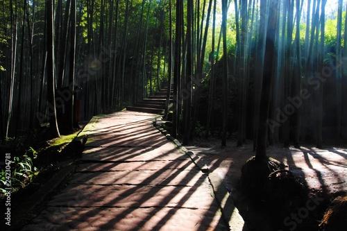 대나무 숲의 빗살