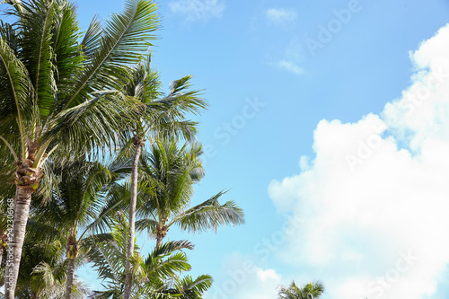 Low Angle View Of Palm Trees Against Blue Sky In Spain
