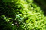 Seedlings in nature. - 242307124