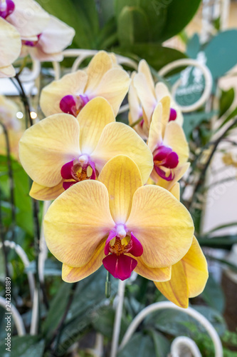 Beautiful yellow orchid flower on nature background