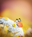 Beautiful butterfly and white flowers. Summer and spring background.