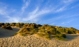 Close up on Camber Sands Beach dune, East Sussex, U.K - 242323984