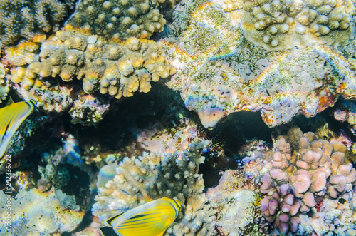 mata magnetyczna red sea coral reef with beautiful colorful fish under water