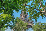 Fototapeta Paryż - Green leaves and world famous Eiffel tower in Paris © Gabriele Maltinti