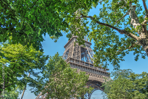 Wall mural Green leaves and world famous Eiffel tower in Paris