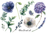 Hand painted blue floral elements. Watercolor botanical illustration with anemone, hydrangea flowers, lavender, juniper, berries and eucalyptus leaves isolated on white background.   - 242340713