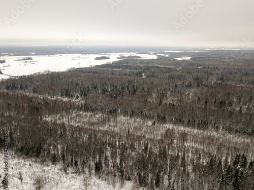 snowy trees in forest seen from above