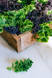 Fresh green and purple kale in a wooden box on a marble background - 242349548