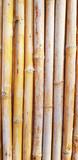bamboo surface pattern
