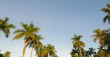 Low angle motion footage moving between palm trees - 242374330