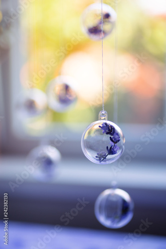 Lavender flowers hanging in transparent balls near sunny window indoor in summer. - 242382130
