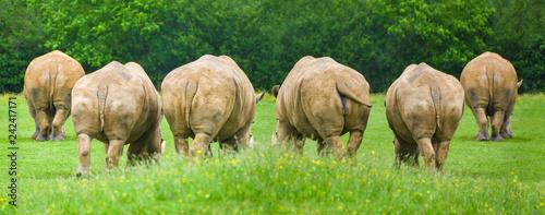 Obraz na płótnie Group Of Rhinoceros , The wildlife animal Beautiful Background