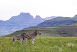 Fototapeta Fototapeta z zebrą - zebra in africa © Magda