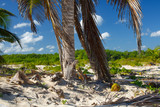 Panorama of the deserted shores of the Atlantic Ocean. - 242423584