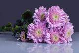 A beautiful bush of pink chrysanthemum variety