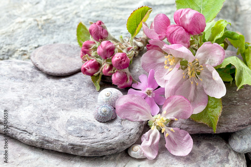 Foto Murales Still life with delicate pastel pink apple blossom