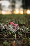 valentines wicker heart in front of snowdrops outdoors at sunset portrait