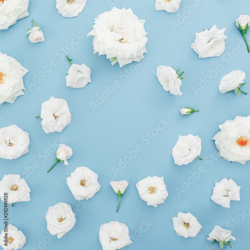 Floral frame with white roses flowers on pastel blue background. Valentines day. Flat lay, top view. - 242444928